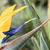 kuş · cennet · vinç · çiçek · arkadan · görünüm · mavi · gökyüzü - stok fotoğraf © meinzahn