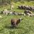 羊 · ウール · フェンス · ブラウン · 白 · 絞首刑 - ストックフォト © meinzahn