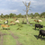 animals in masai mara national park stock photo © meinzahn