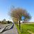 florescimento · árvore · rua · bicicleta · flor - foto stock © meinzahn