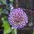 rózsaszín · virág · virágok · nyitva · zöld · kezdet - stock fotó © meinzahn