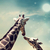 Жирафы · высокий · трава · Серенгети · ребенка · деревья - Сток-фото © melpomene