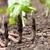 növény · Föld · kicsi · ásó · nő · tart - stock fotó © melpomene