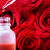dropper bottle with red roses stock photo © melpomene