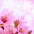 sakura · japans · bloem · voorjaar · abstract - stockfoto © melpomene
