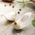 specerijen · knoflook · vers · peterselie · bladeren · keramische - stockfoto © melpomene
