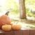 narancs · tökök · ház · napsütés · kívül · étel - stock fotó © melpomene