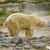 зоопарке · Голландии · воды · ребенка · ребенка · морем - Сток-фото © michaklootwijk