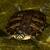 изолированный · европейский · пруд · черепахи · белый · мнение - Сток-фото © michaklootwijk