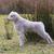 pequeno · cordeiro · bebê · cara · natureza - foto stock © michaklootwijk