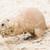 préri · kutya · természetes · élőhely · gyűlés · állat - stock fotó © michaklootwijk