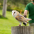 an owl in captivity stock photo © michaklootwijk
