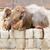 dois · comprometido · mútuo · família · natureza · animal - foto stock © michaklootwijk
