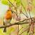 Cute · саду · птица · веточка · европейский · Тит - Сток-фото © michaklootwijk