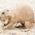 préri · kutya · természetes · élőhely · gyűlés · természet - stock fotó © michaklootwijk