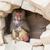adult female baboon resting stock photo © michaklootwijk