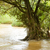 solitary tree flooded in a fast flowing stream stock photo © michaklootwijk