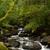 公園 · 豊かな · 緑 · 冷たい · 雨林 · カナダ - ストックフォト © michaklootwijk