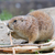 préri · kutya · eszik · természetes · élőhely - stock fotó © michaklootwijk