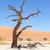 dode · bomen · Rood · woestijn · hemel · boom - stockfoto © michaklootwijk