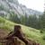 alsónadrágok · erdő · völgy · fa · fa · munka - stock fotó © michaklootwijk