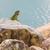 retrato · iguana · lagarto · natureza · verão · dia - foto stock © michaklootwijk