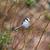 longo · teta · natureza · pássaro - foto stock © michaklootwijk