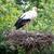 paar · witte · nest · paal · plaats · vogel - stockfoto © michaklootwijk