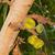 verde · árvore · folha · jardim · fundo · fazenda - foto stock © michaklootwijk