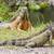 イグアナ · 自然 · 生息地 · 自然 · 緑 · 熱帯 - ストックフォト © michaklootwijk