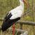 Stork in a zoo  stock photo © michaklootwijk