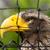 stellers sea eagle in captivity stock photo © michaklootwijk