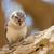serçe · tür · güney · Afrika · kuş · tüy - stok fotoğraf © michaklootwijk