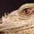 緑 · イグアナ · は虫類 · 詳しい · 皮膚 · 舌 - ストックフォト © michaklootwijk