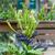carnívoro · plantas · brilhante · preto · de · volta - foto stock © michaklootwijk