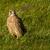 jovem · falcão · palheiro · animal · país · prado - foto stock © michaklootwijk