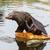 south american sea lion stock photo © michaklootwijk