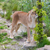 кошки · власти · женщины - Сток-фото © michaklootwijk