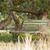 rosolare · legno · giardino · panchina · erba · verde · verde - foto d'archivio © michaklootwijk