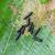 kıllı · siyah · tırtıl · yaprak · yeşil · karanlık - stok fotoğraf © michaklootwijk