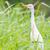 скота · белый · Постоянный · природы · области · птица - Сток-фото © michaklootwijk