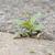 flor · crescente · rachar · asfalto · grama · verde · velho - foto stock © michaklootwijk