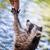 gıda · yetişkin · su · yüz · siyah · ayı - stok fotoğraf © michaklootwijk