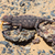 camaleão · caça · deserto · Namíbia · olhos · fundo - foto stock © michaklootwijk