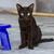 котенка · сидят · Председатель · черно · белые · празднование · дня · рождения - Сток-фото © michaklootwijk