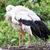 hemel · voorjaar · vogels · zwarte · witte · vleugels - stockfoto © michaklootwijk