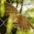 死んだ · 鳥 · 小さな · 舗装 · 自然 · 通り - ストックフォト © michaklootwijk