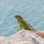 緑 · イグアナ · 座って · 岩 · カリビアン · 海岸 - ストックフォト © michaklootwijk