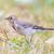 grama · pássaro · preto · branco - foto stock © michaklootwijk