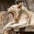 лев · ходьбе · саванна · ЮАР · голову - Сток-фото © michaklootwijk